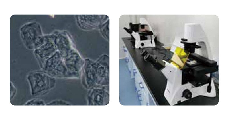 明美 MSHOT 荧光生物显微镜 MF52-M使用方法