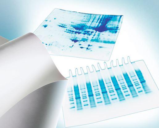 默克密理博 Merck Millipore PVDF膜 0.45µm 26.5cmx3.75m IPVH00010基本信息